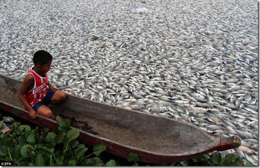 Muertes masivas de peces en Indonesia