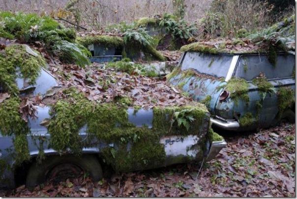 Cemitério de carros na floresta (3)