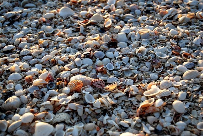 sanibel-shell-1
