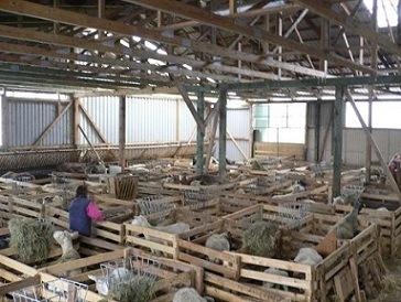 Περιφέρεια: Υποχρεωμένες να λάβουν άδεια όσες κτηνοτροφικές εγκαταστάσεις δε διαθέτουν
