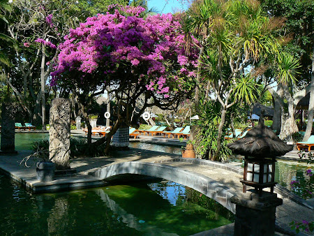 Hotel Hyatt Sanur pool and flowers