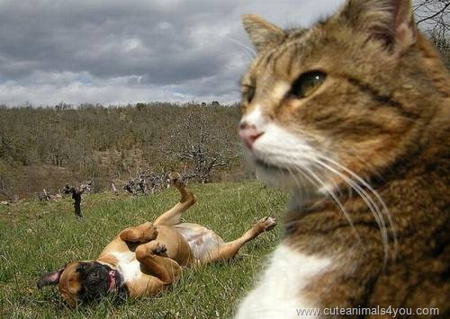 50_Funniest_Animal_Photobombs_Of_All_Time_48