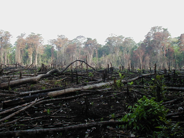 Deforestation in Nigeria. deforestation-facts.blogspot.com