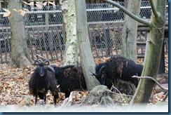 2011-11-28 Wildwood 078