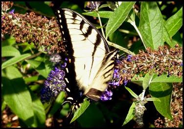 03e - Butterflies