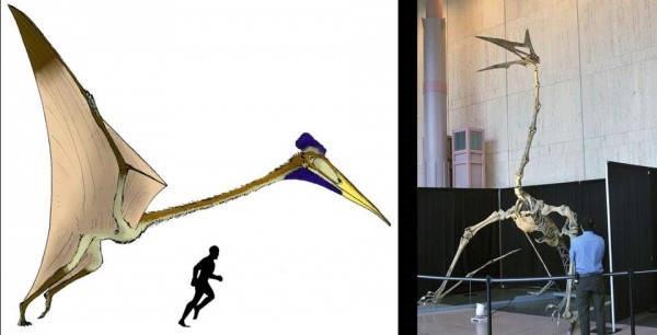 5- O Quetzalcoatlus