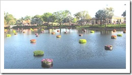 Florida vacation Epcot floating circles of flowers in the water