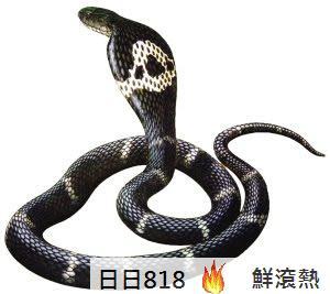 世界最長眼鏡蛇