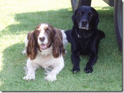 Bungay2007 Baxter&Fern