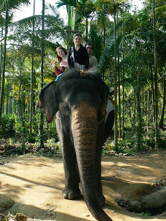 Things to do in Kerala: riding an Indian elephant