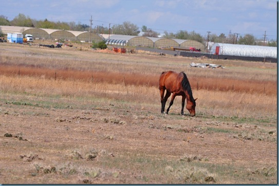 05-09-13 horses 09