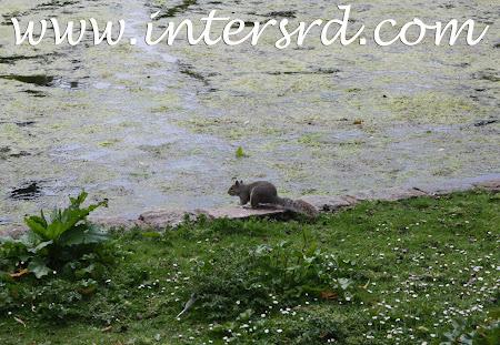2011_05_07 Viagem a Londres 26.jpg