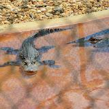 Park Aligatorów -...
