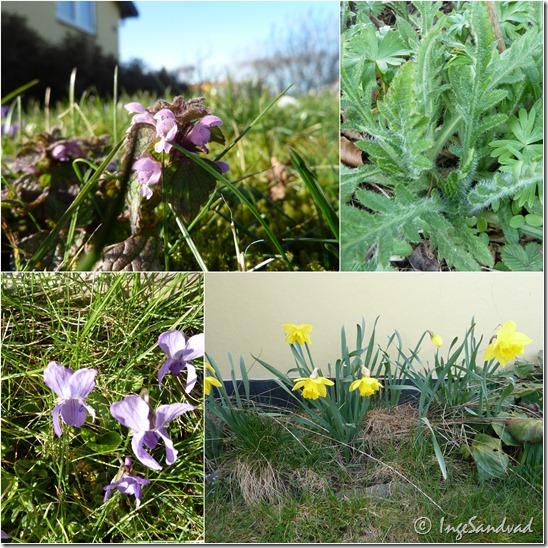 blomster i haven2
