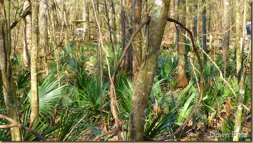 Beidler Forest_011 - Copy