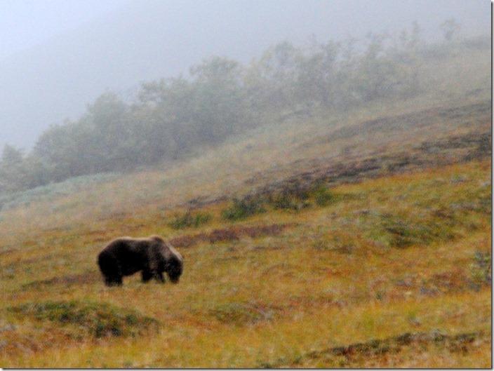 2013_08_Alaska 1028