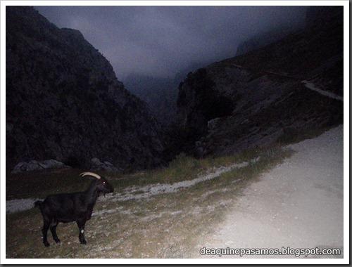 Poncebos-Canal de Trea-Jultayu 1940m-Lagos de Covadonga (Picos de Europa) 5083