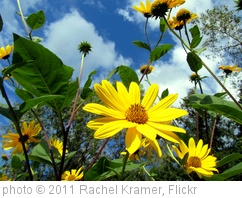 'Sunshine' photo (c) 2011, Rachel Kramer - license: http://creativecommons.org/licenses/by/2.0/