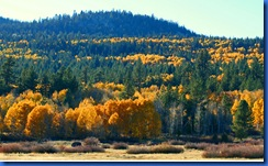 Highway 88 Fall Colors-173