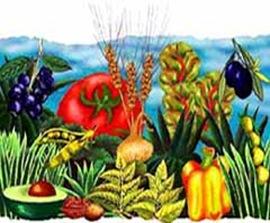 Frutta e legumi composizione a tempera (disegno colori)(piccolo)