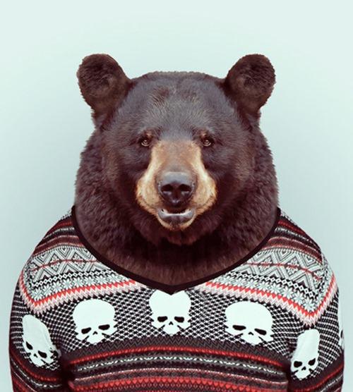animais roupas humanas - urso