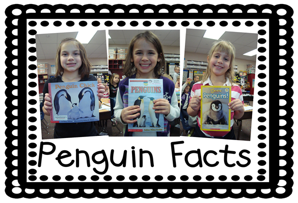 penguin facts1