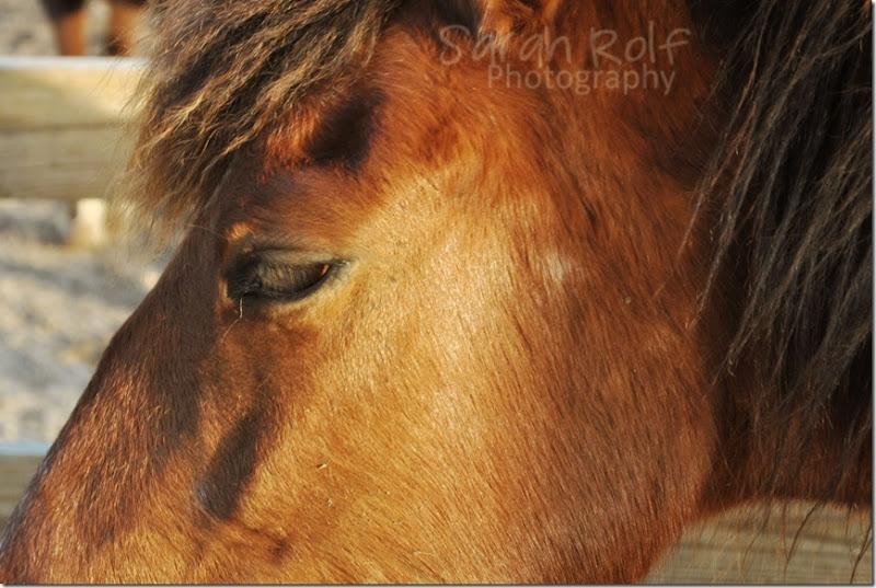 horse-at-dusk-2