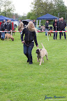 20100513-Bullmastiff-Clubmatch_30915.jpg