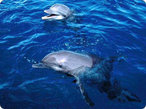 delfini8
