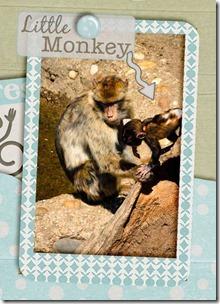 dettaglio little monkey