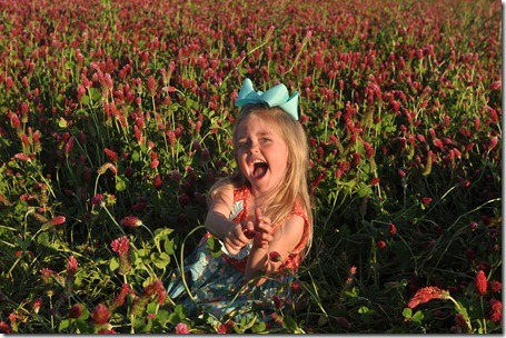 red clover pics 0423 (75)