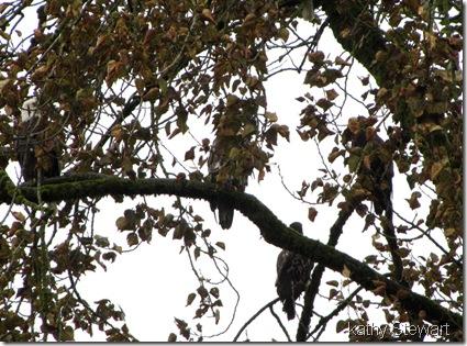Spot the eagle