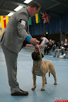 20130510-Bullmastiff-Worldcup-0765.jpg