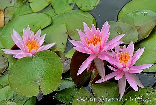 Glória Ishizaka - flores 84