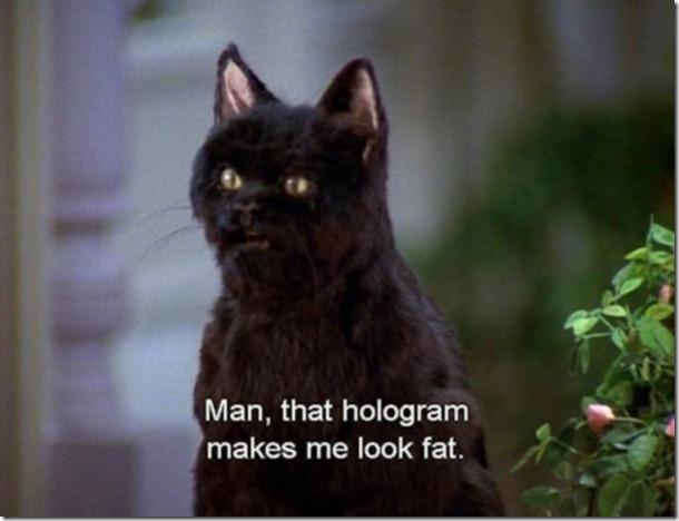 salem-saberhagen-cat-17