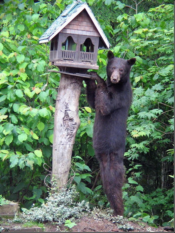 Bird & Bear Feeder