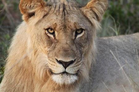 Leu - Africa de Sud.jpg