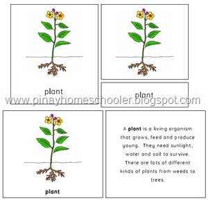 Th Plant