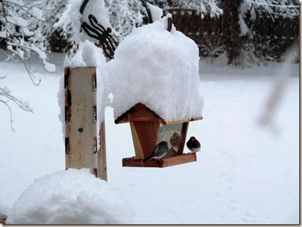 snow12-14-13a