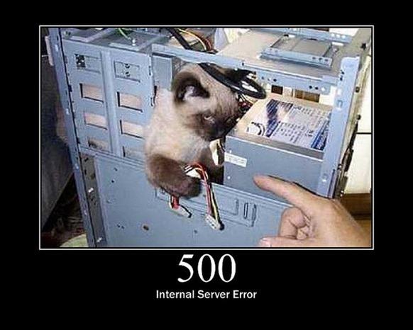 HTTP-Status-Cats-24