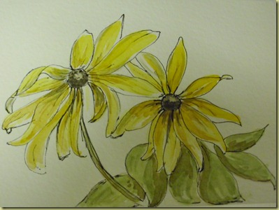 watercolor blackeyed susan