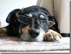 terza età cane invecchiamento cerebrale