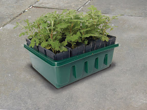Compact Rapid Rootrainer with seedlings