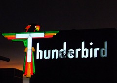 Neons-of-Florida---Thunderbird