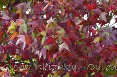 9 - Glória Ishizaka - Folhas de Outono