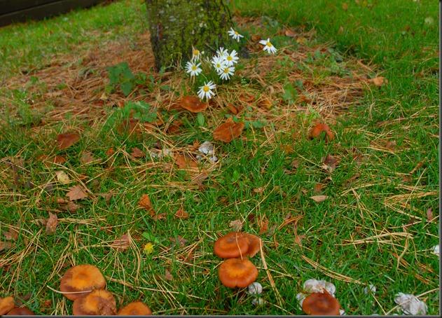 koivunkanto sieniä 023