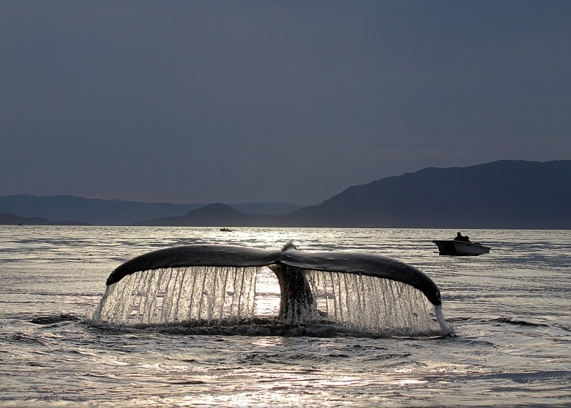 A WHALE OF A TAIL