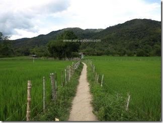 Bakalalan_rice_field_sawah_padi_3