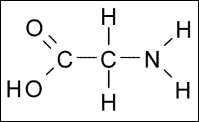 Glycine2