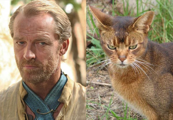 E se os personagens de Game of Thrones fossem gatos 14